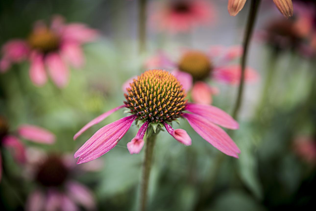 WEB Fotgrafie Tipps im Garten 1769