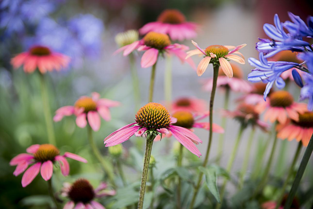 WEB Fotgrafie Tipps im Garten 1770