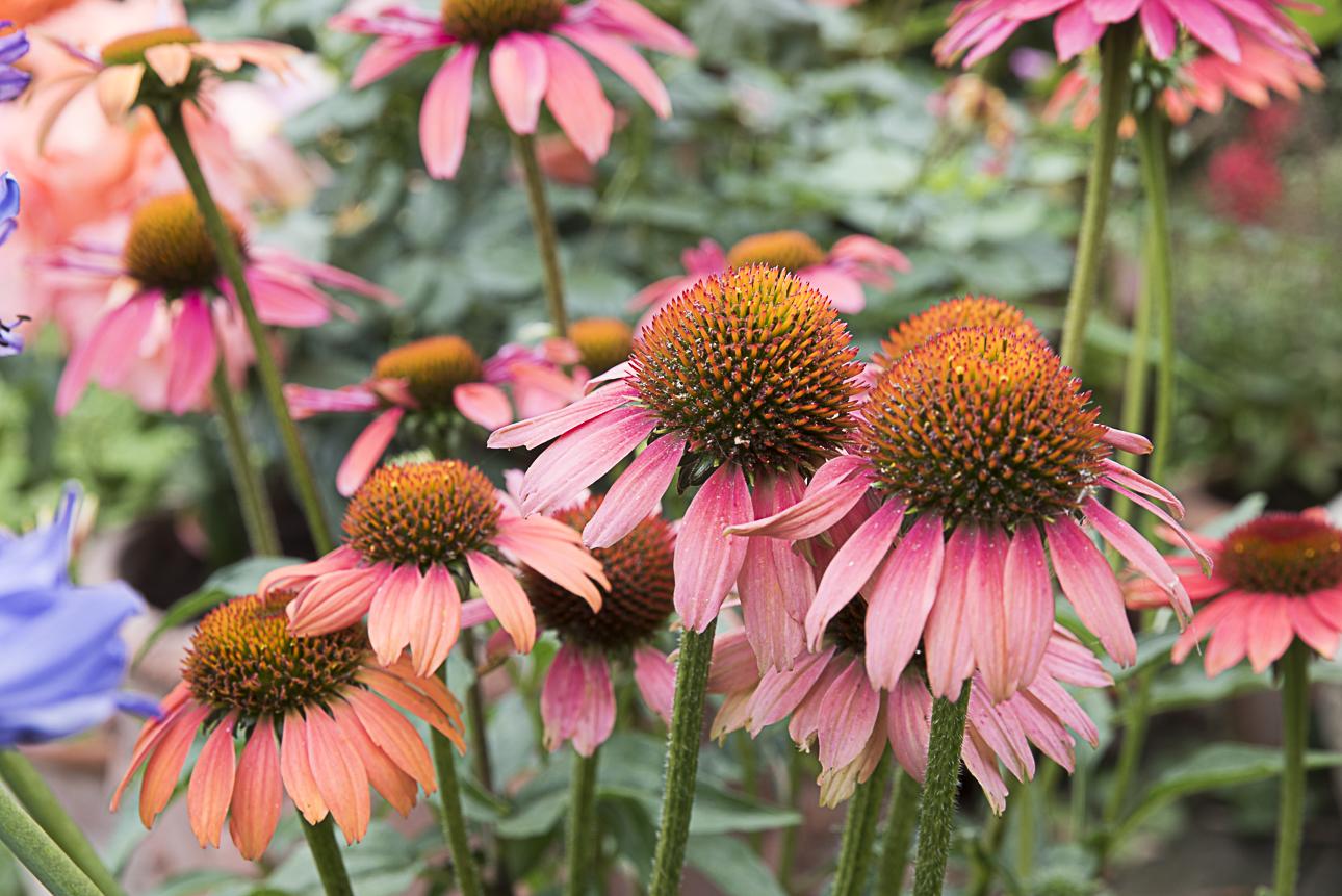 WEB Fotgrafie Tipps im Garten 1777