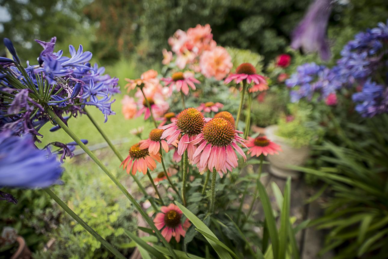 WEB Fotgrafie Tipps im Garten 1844