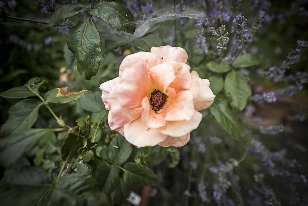 WEB Fotgrafie Tipps im Garten 1846