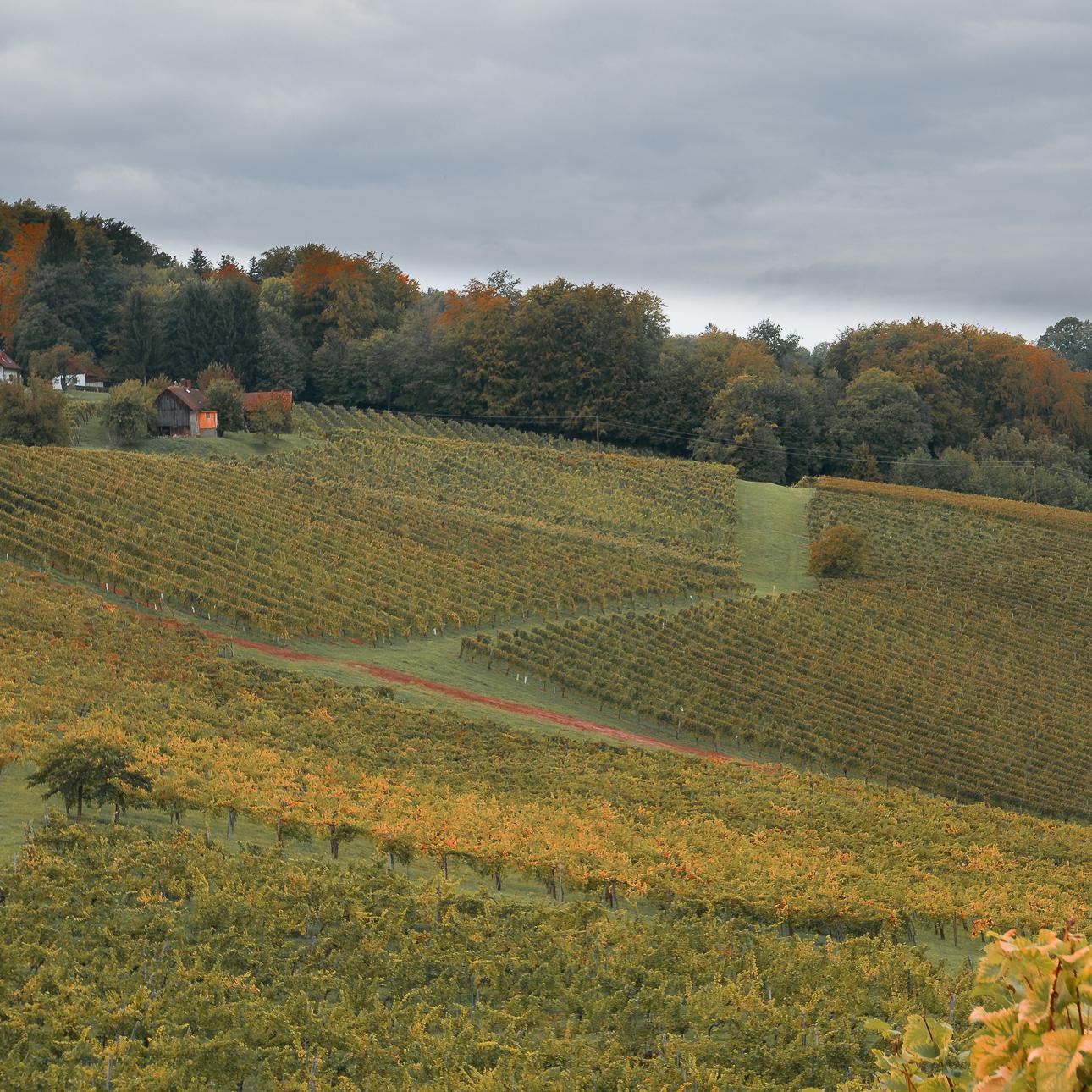 Fotokurs Steiermark Weinstrae Steirische Toskana Fotoworkshop 1080679
