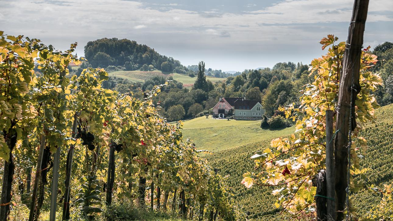 Fotokurs Steiermark Weinstrae Steirische Toskana Fotoworkshop 1080723